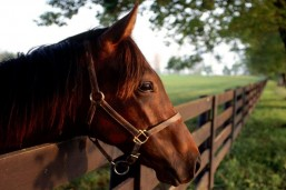 Терский племенной конный завод